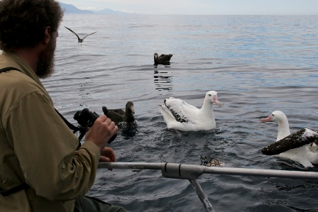 Steve with Wandering Albatross