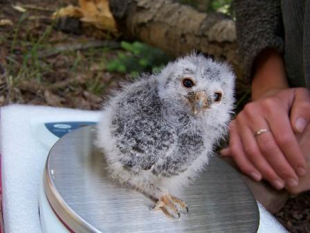 One cute owl