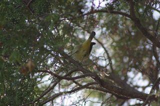 Bird C