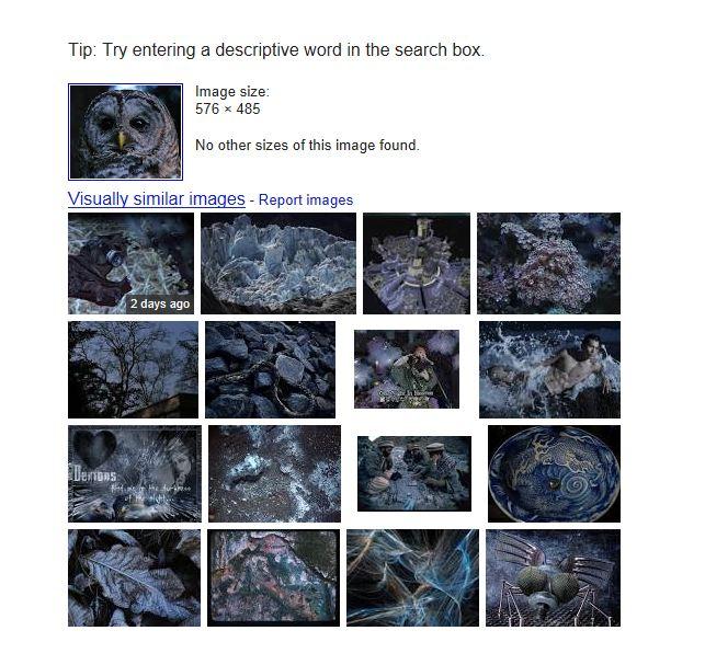 Barred owl image