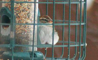 IMG_4491-sparrow-small