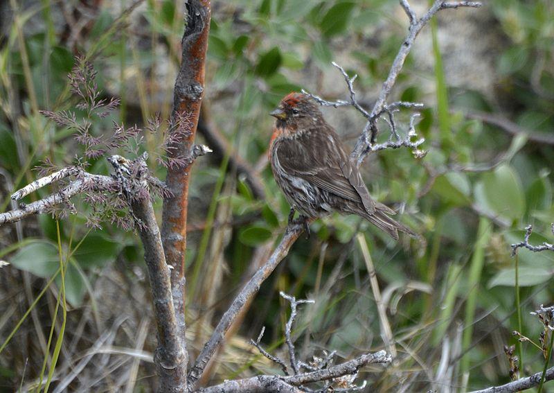 CORE_male_Kangerlussuaq-5lr