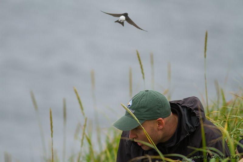 ABArare Common House-Martin Gochfeld Cox
